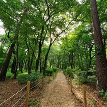 *【遊歩道(一例)】季節によって変化する昭和の森は、何度来ても新しい発見があります