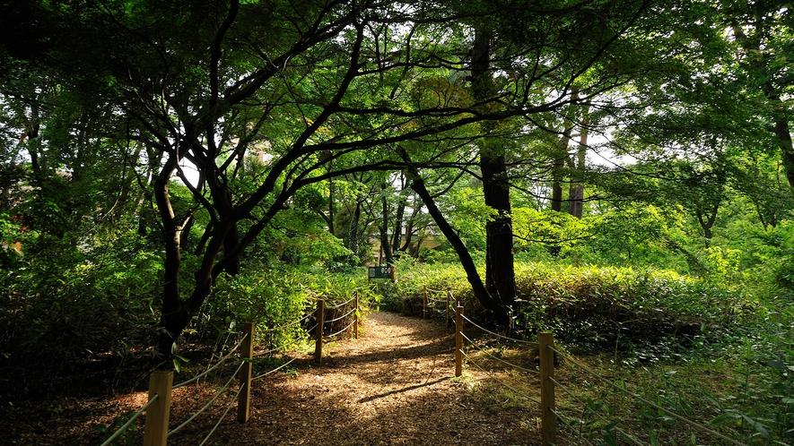 **【遊歩道(一例)】森林の中をゆっくりお散歩して、心も身体もリフレッシュ