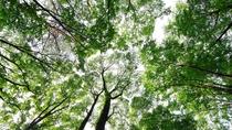**【遊歩道(一例)】木々に囲まれた遊歩道は、自然に触れられるお散歩コースです