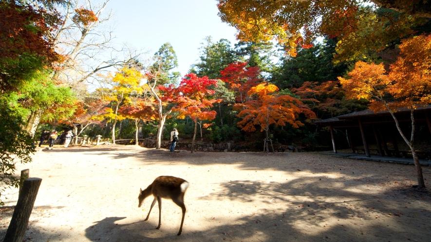 <周辺・景観>宮島 「写真提供:広島県」