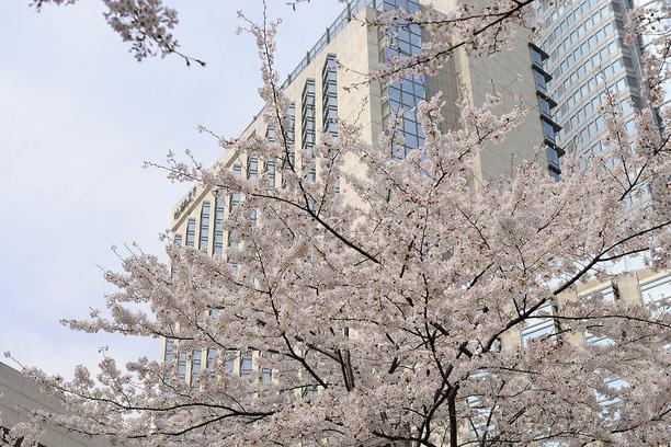 外観(桜シーズン)