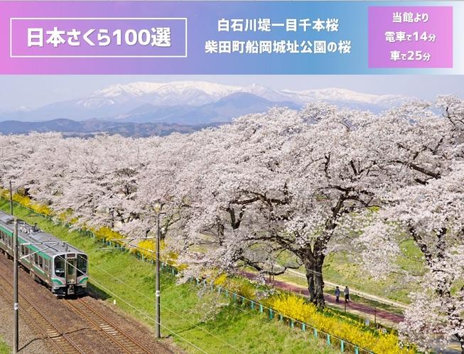 日本さくら100選「白石川堤一目千本桜」「柴田船岡城址公園の桜」は当館より電車14分、車で25分