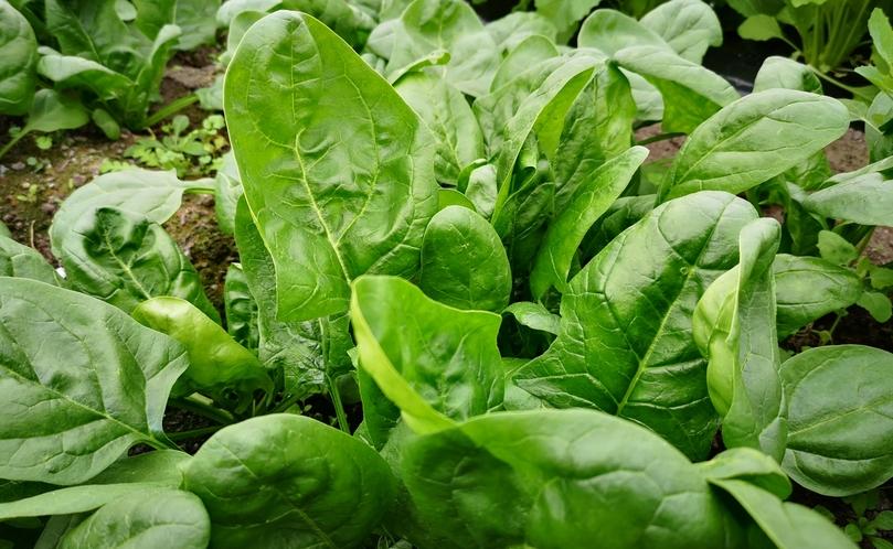 契約農家から届く新鮮なお野菜。味が濃くておいしいと評判ですよ。