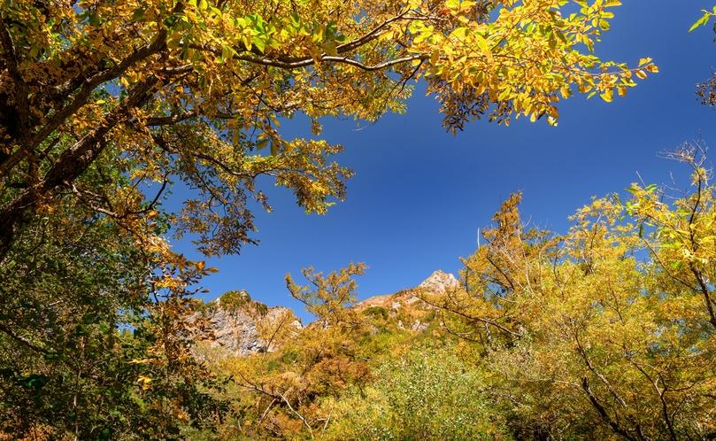 初秋の景色。温かい色に色づき始めます