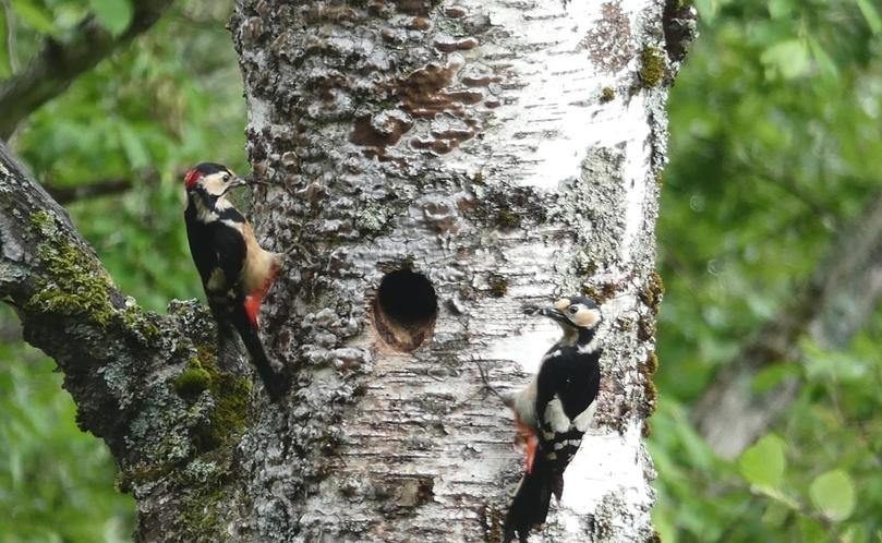 1年を通して、数えきれないほどの種類の野鳥がやってきます。今日は、どの子に会えるかな?