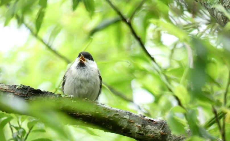 周辺には、かわいらしい野鳥が見られます。小鳥たちと一緒にトレッキングを楽しむのも良いですね。