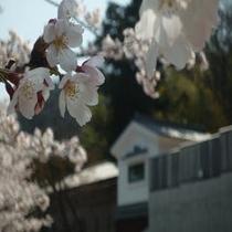 桜の奥には離れ「紫貴」が