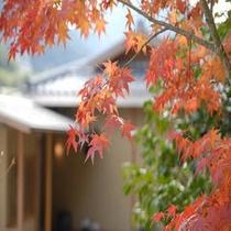 美しい紅葉をご覧いただけます。
