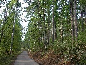 蓼科湖を少し離れた別荘への道