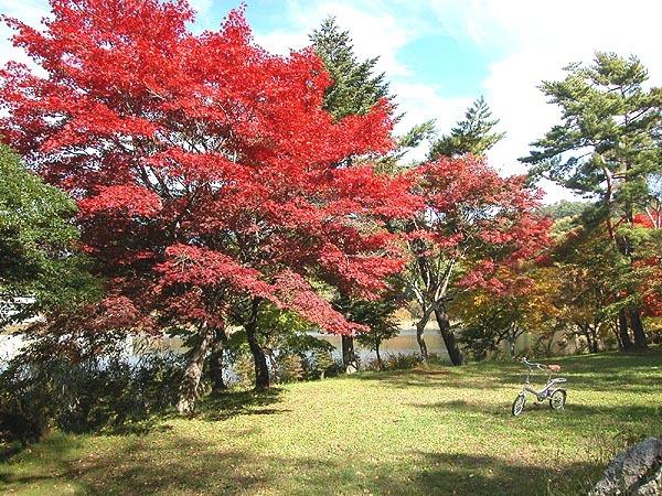 蓼科湖畔の紅葉