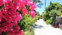 【ブーゲンビリア】盛夏をイメージさせる赤やピンクの鮮やかなお花です♪