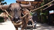【竹富島・水牛】水牛に乗って町を散策♪