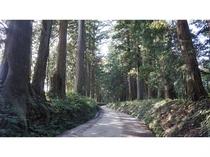 ◇日光杉並木◇世界最長の並木道としてギネスブックにも登録されています 徒歩1分