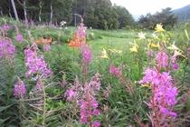 希少な山野草が咲く、峰の原の草原
