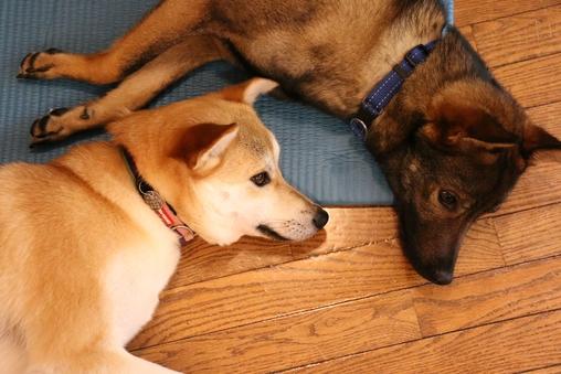 愛犬同伴ルーム