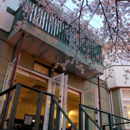 アルシオン 桜満開時 夕暮れ時