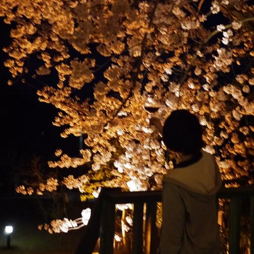 アルシオンの桜