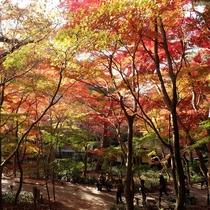 【月光園から徒歩20分】瑞宝寺公園◆例年の紅葉ピークは11月中旬頃。公園のお近くまで送迎可能です。