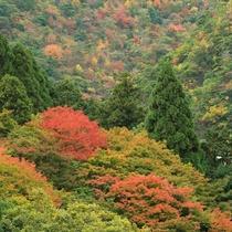 【絶景の宿】秋の紅葉◆例年11月中旬に紅葉のピークを迎えます。有馬温泉町内が大変賑わう季節です。