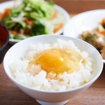 【健康無料朝食】たまごごはん