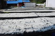 チリメンジャコの干し場風景