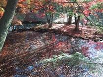 雲場池の美しい紅葉
