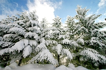 ☆冬風景/積雪樹々_300
