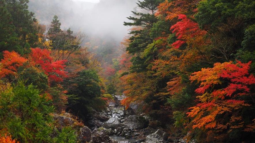 *周辺観光/当館から車で約20分の釜ヶ谷渓谷。様々な滝に囲まれた美しい渓谷です。
