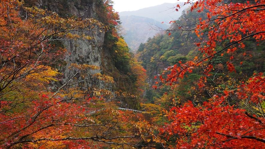 *周辺観光/当館から車で約15分ほどの大釜渓谷は11月中旬~下旬で真っ赤な紅葉が映えます。
