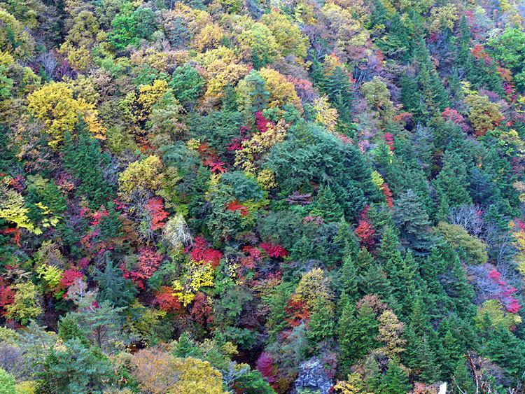 横谷渓谷観音平の紅葉