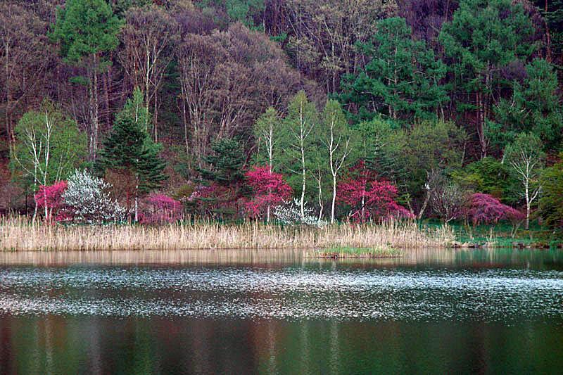 蓼科湖2(5月)