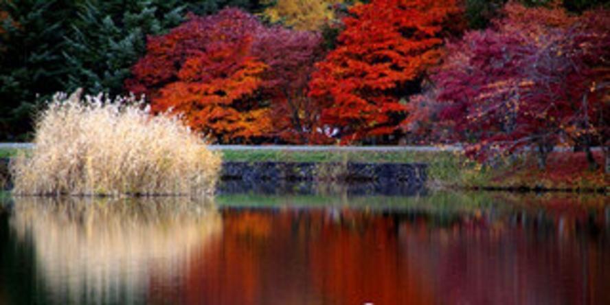 秋の蓼科湖メイン用