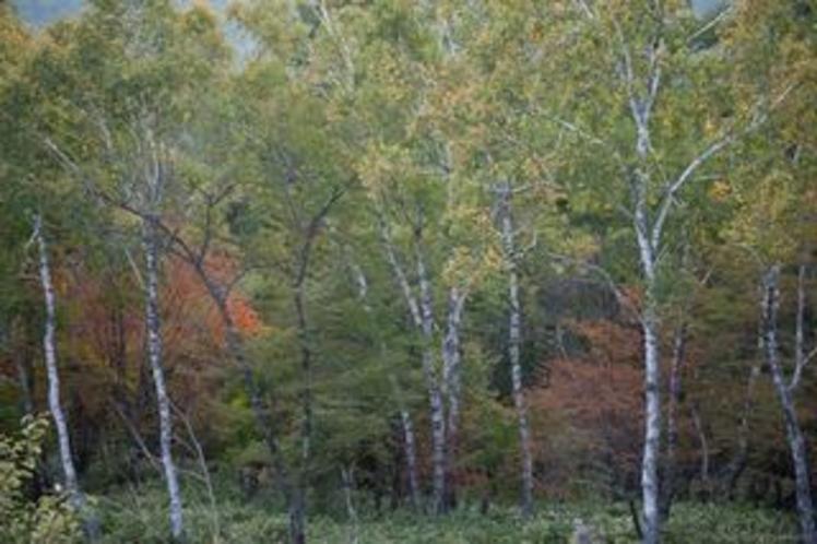 ピラタスの丘の紅葉