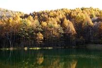 秋の御射鹿池02