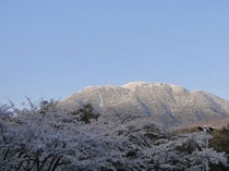 蓼科湖の千本桜