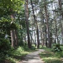 【遊歩道】/ゆったりと過ごすにはぴったりの場所です