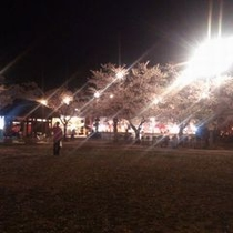 【高田公園の夜桜】/高田公園の夜桜は「日本夜景遺産 ライトアップ夜景遺産」に認定されています
