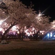 【高田公園の夜桜】/桜並木がライトアップされた「さくらロード」は、とても幻想的です