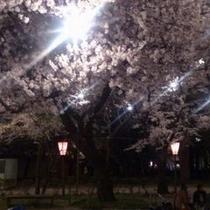 【高田公園の夜桜】/青森県の弘前公園、東京都の上野恩賜公園と並び「日本三大夜桜」の一つと言われていま