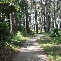【遊歩道】/ゆったりと過ごすにはぴったりの場所です。