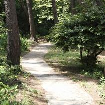 【遊歩道】/四季折々の表情を見せる自然を直に感じることができます。