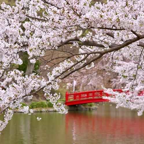 臥竜公園の桜と弁天橋