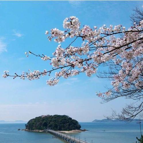 【周辺】竹島と桜