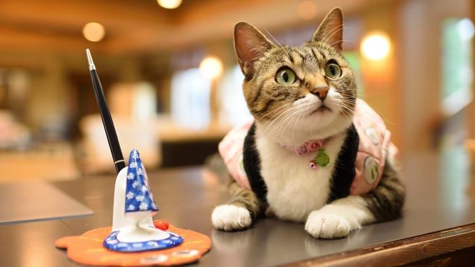 <夕食個室>【ねこ女将のおもてにゃし】肉球付ステーキやケーキなどオリジナル特典盛りだくさん♪