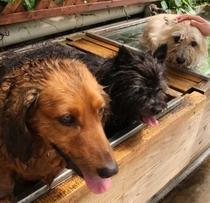 深さも2段階だから、大型犬から小型犬まで安心♪