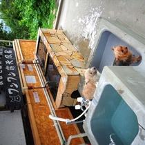 ワンワン露天風呂が新しくキレイになりました♪