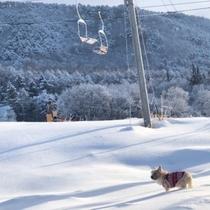 よませ温泉スキー場♪すぐとなりです
