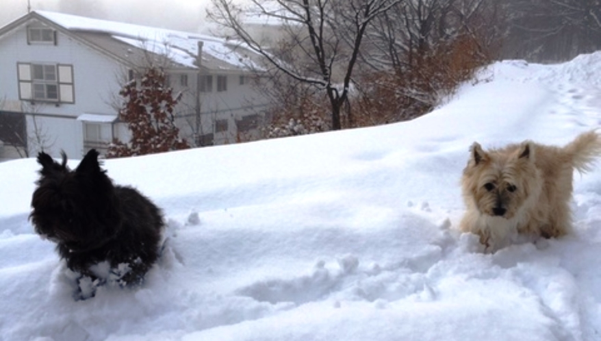 雪遊び♪わんちゃんも喜びますよ