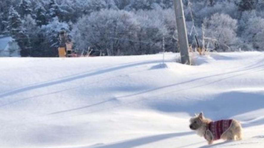 愛犬と一緒に♪北志賀高原でスキー♪