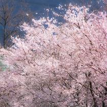 阿蘇に訪れる遅い春